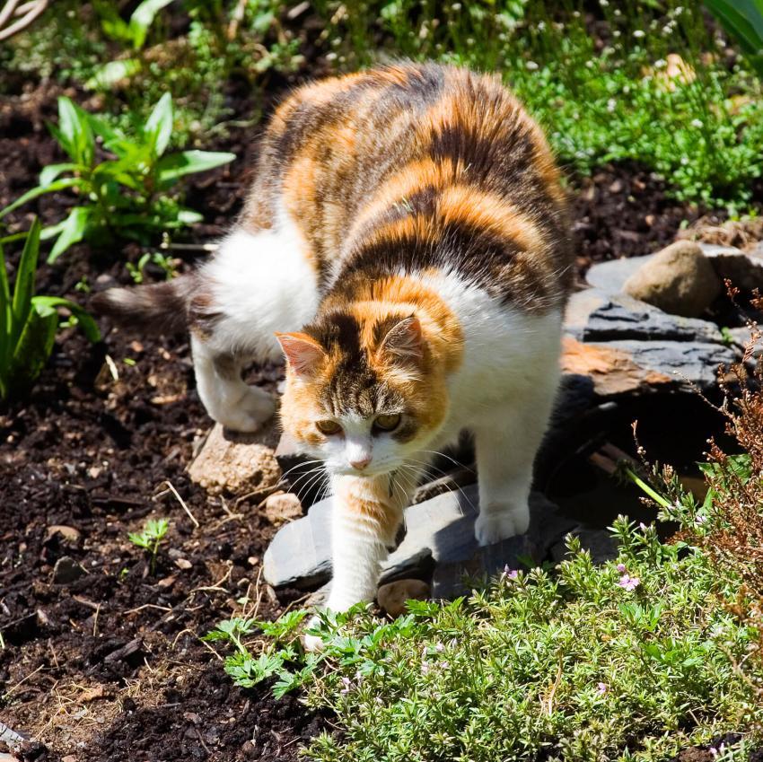 https://cf.ltkcdn.net/cats/images/slide/242627-850x849-3-calico-cats.jpg