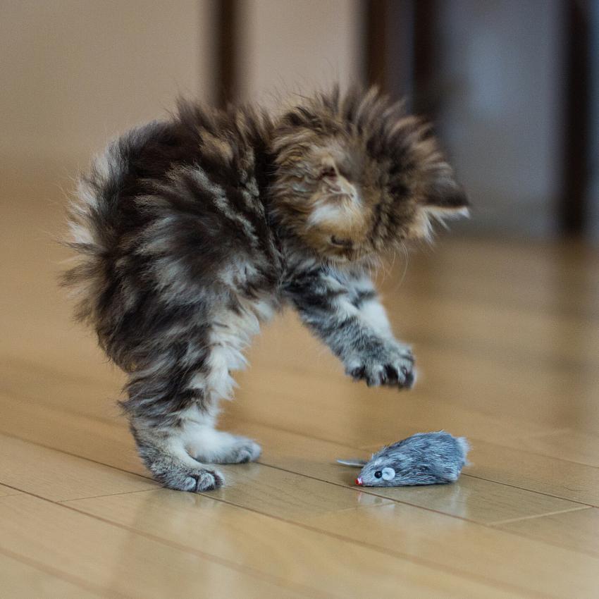 https://cf.ltkcdn.net/cats/images/slide/242633-850x850-8-funny-kittens.jpg