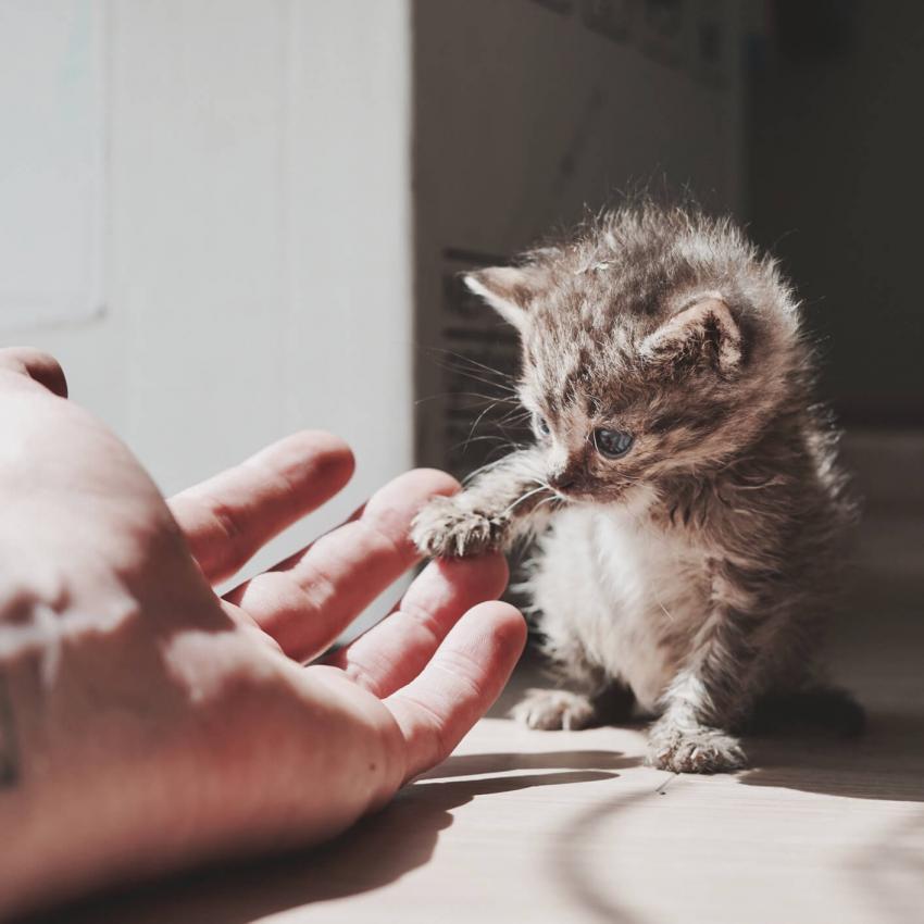 https://cf.ltkcdn.net/cats/images/slide/242635-850x850-10-funny-kittens.jpg