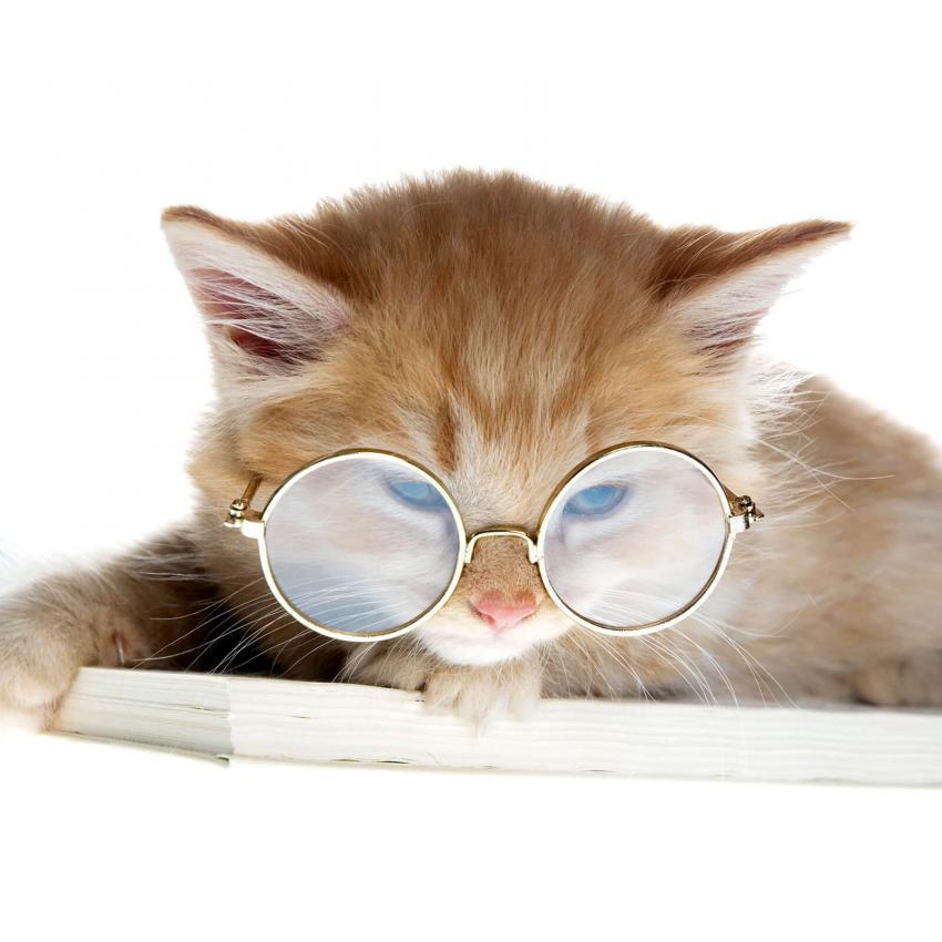 https://cf.ltkcdn.net/cats/images/slide/242640-850x850-15-funny-kittens.jpg