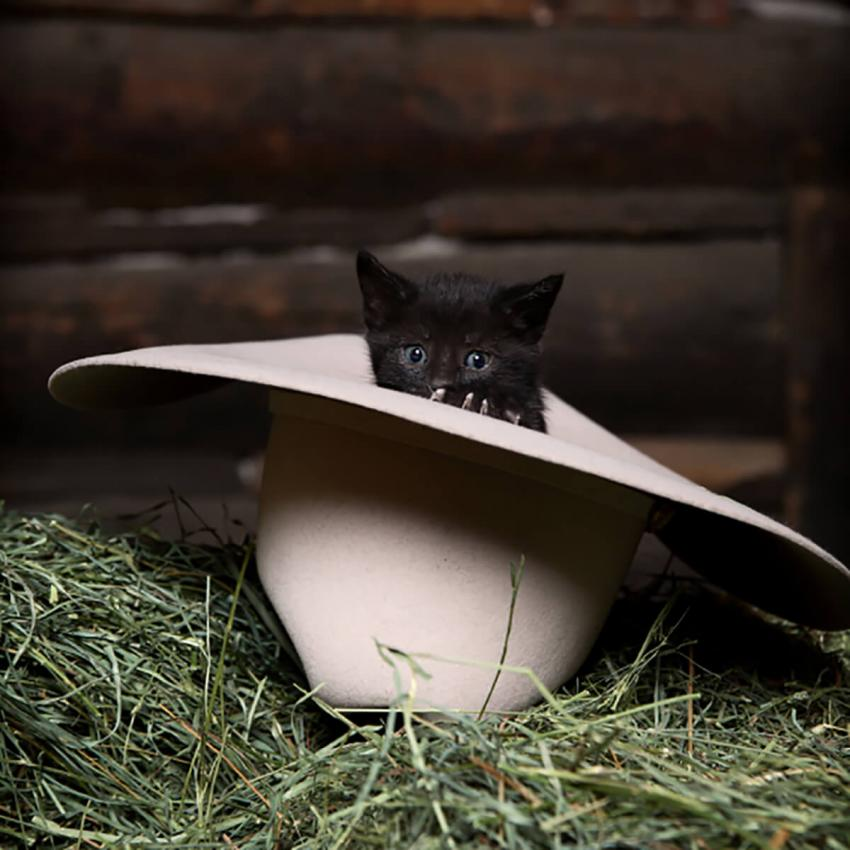https://cf.ltkcdn.net/cats/images/slide/242643-850x850-5-funny-kittens.jpg