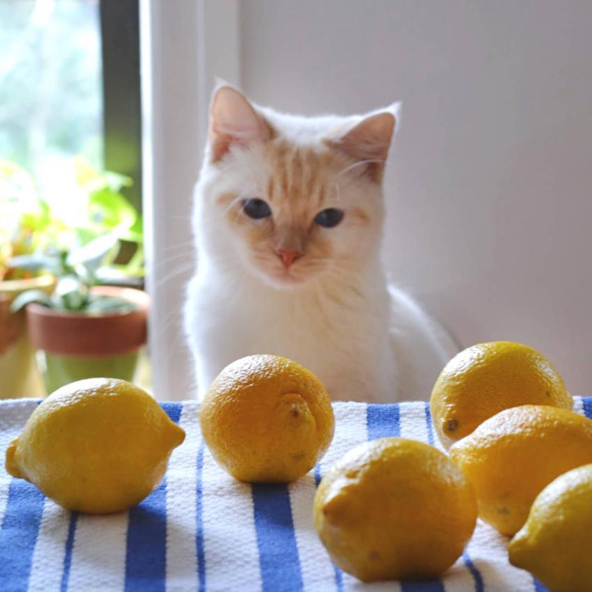 https://cf.ltkcdn.net/cats/images/slide/243234-850x850-7-smells-cats-hate.jpg