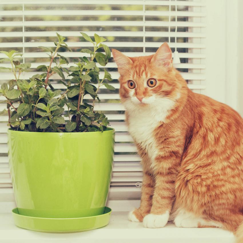 https://cf.ltkcdn.net/cats/images/slide/243235-850x850-8-smells-cats-hate.jpg