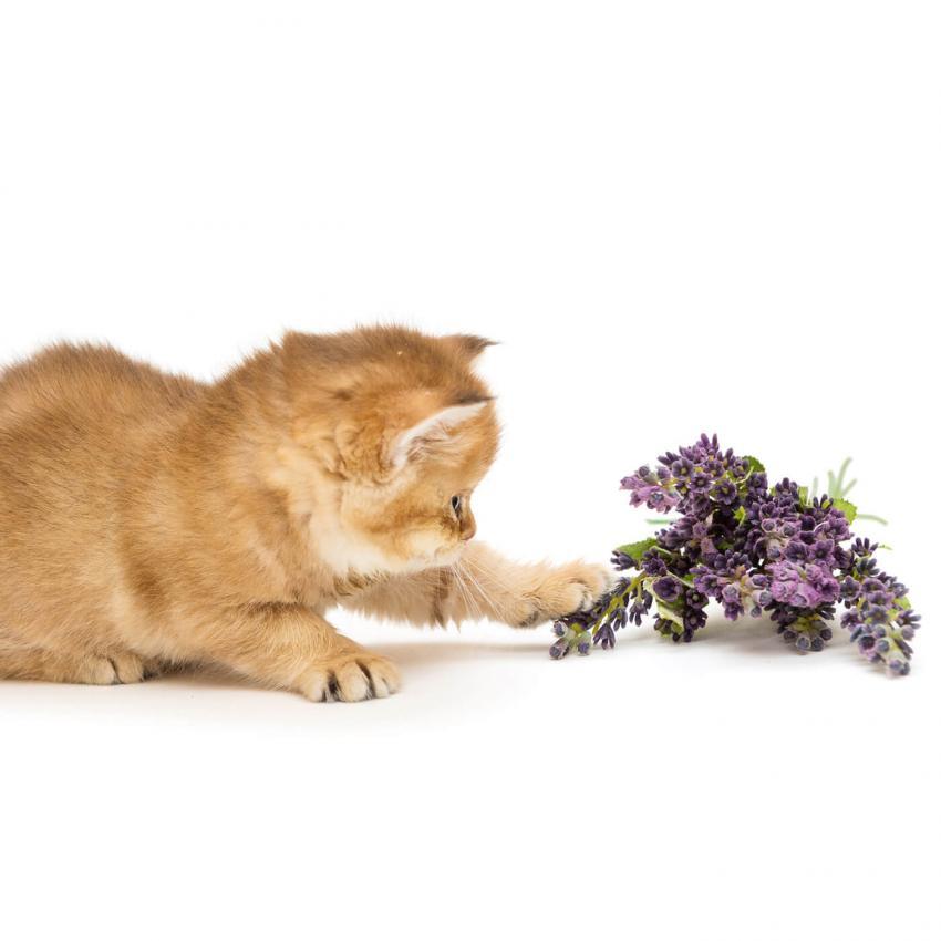 https://cf.ltkcdn.net/cats/images/slide/243238-850x850-11-smells-cats-hate.jpg