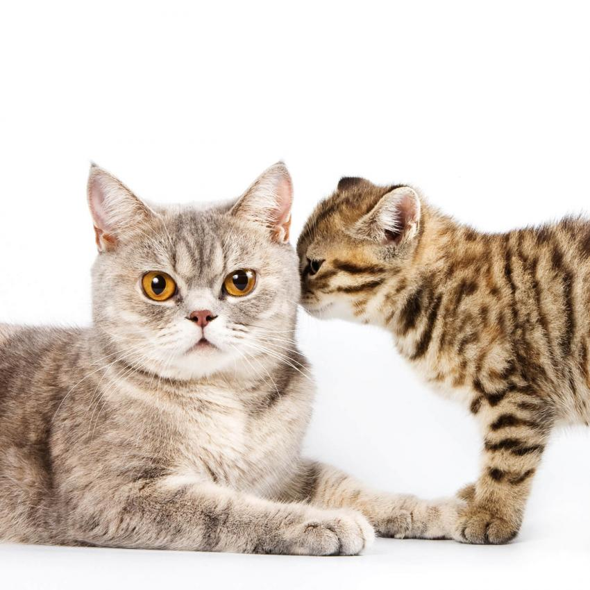 https://cf.ltkcdn.net/cats/images/slide/243243-850x850-3-smells-cats-hate.jpg