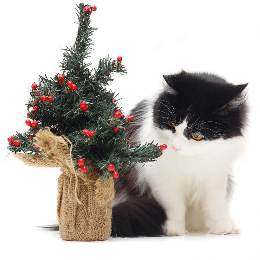 https://cf.ltkcdn.net/cats/images/slide/243245-850x850-1-smells-cats-hate.jpg