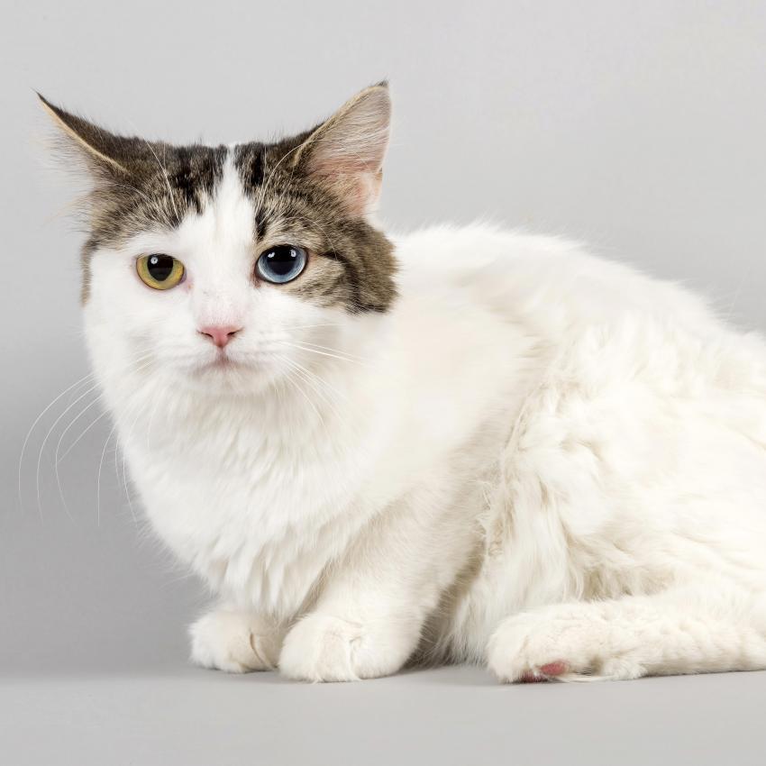 https://cf.ltkcdn.net/cats/images/slide/243795-850x850-iris-heterochromia.jpg