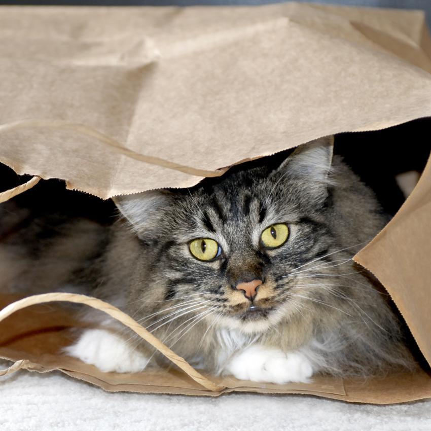 https://cf.ltkcdn.net/cats/images/slide/243815-850x850-cat-in-a-bag.jpg