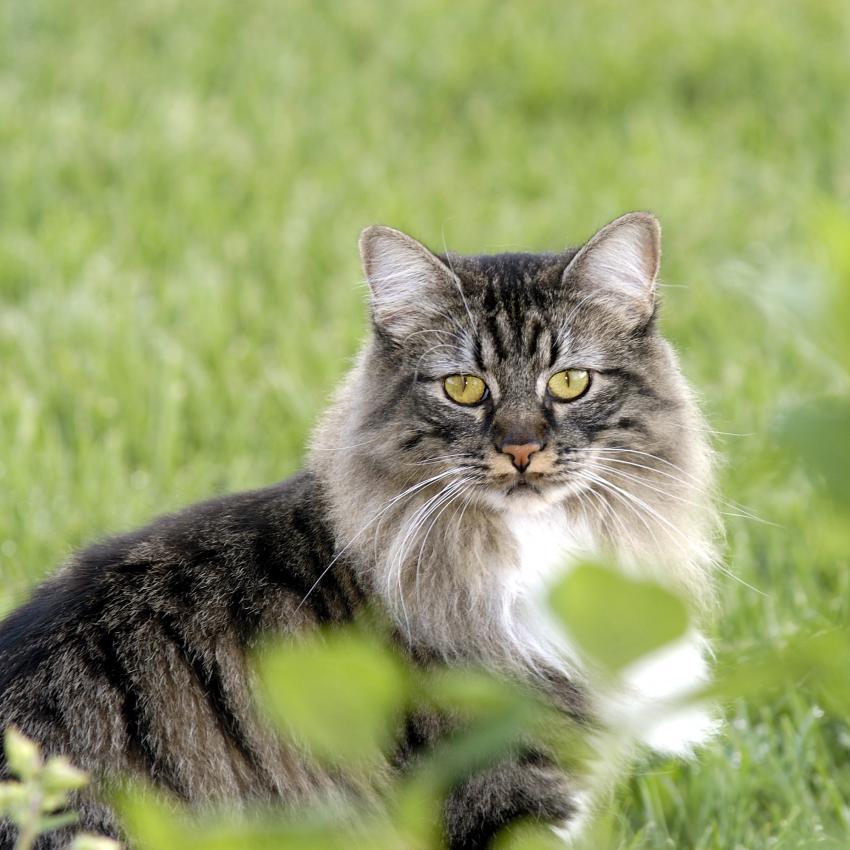 https://cf.ltkcdn.net/cats/images/slide/243816-850x850-cat-in-grass.jpg