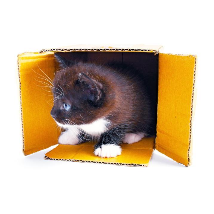 https://cf.ltkcdn.net/cats/images/slide/245218-717x717-kitten-in-box-copy.jpg