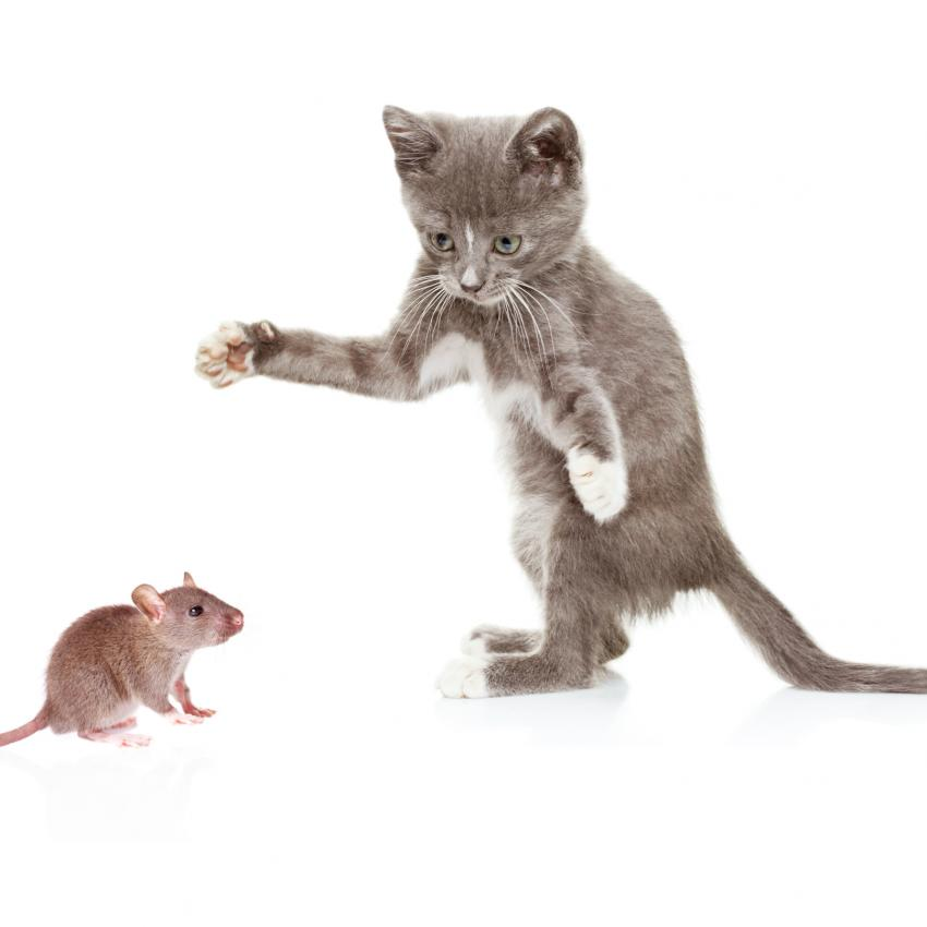 https://cf.ltkcdn.net/cats/images/slide/245224-850x850-cat-and-mouse.jpg