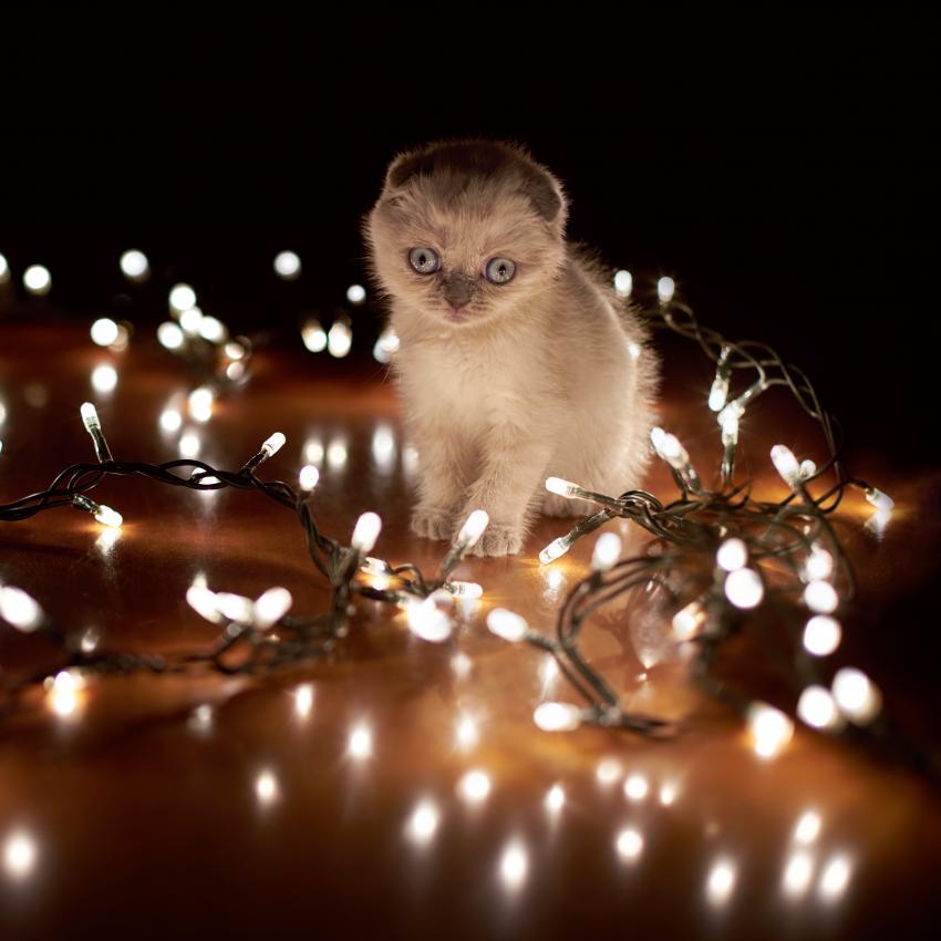 https://cf.ltkcdn.net/cats/images/slide/245226-850x850-kittie-and-ligts.jpg