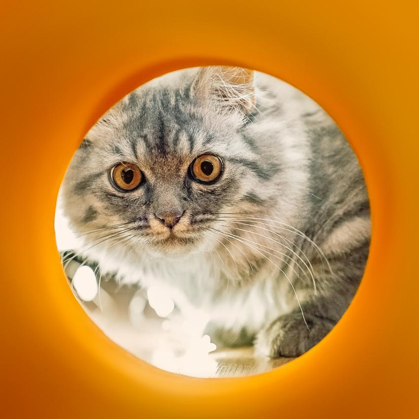 https://cf.ltkcdn.net/cats/images/slide/245232-850x850-cat-in-orange-pipe.jpg