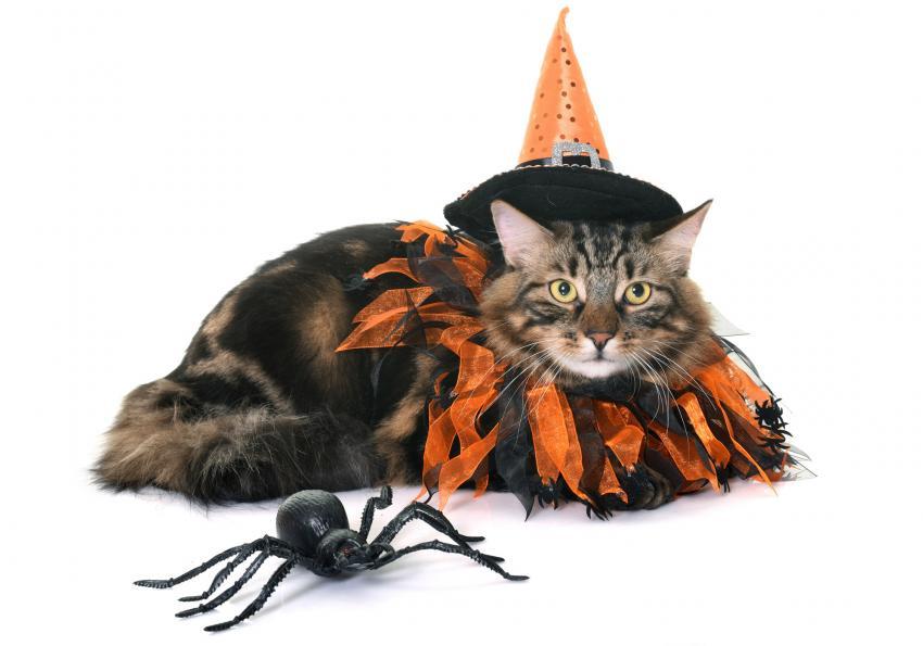 https://cf.ltkcdn.net/cats/images/slide/251989-850x595-1_Halloween_Cat.jpg