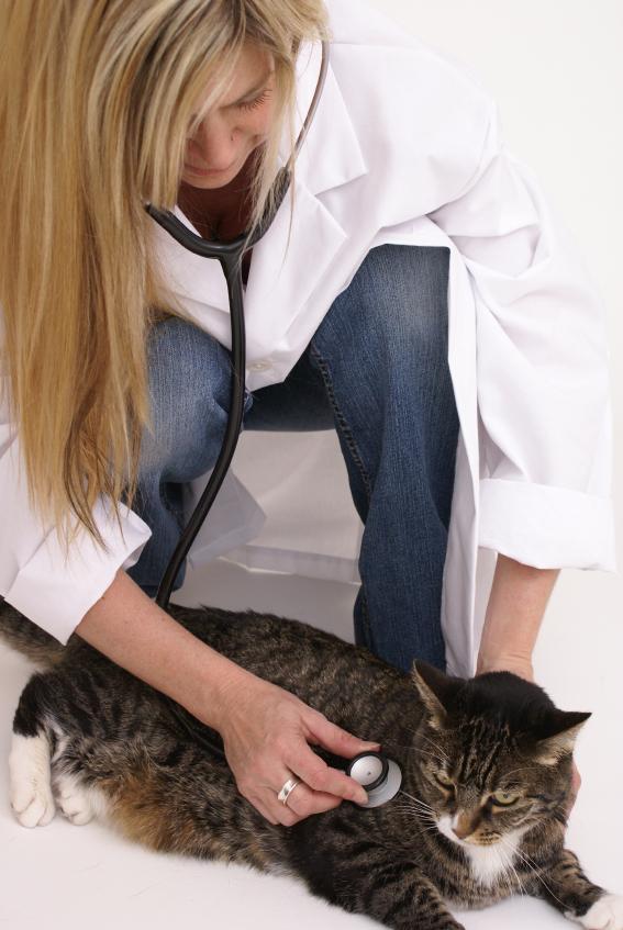 https://cf.ltkcdn.net/cats/images/slide/89807-567x847-Fat-cat-2.jpg