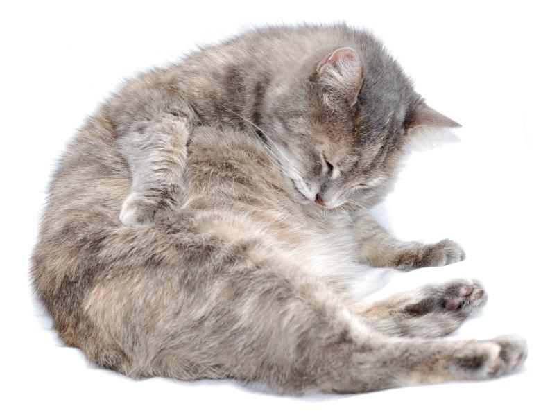 https://cf.ltkcdn.net/cats/images/slide/89810-806x596-Fat-cat-5.jpg