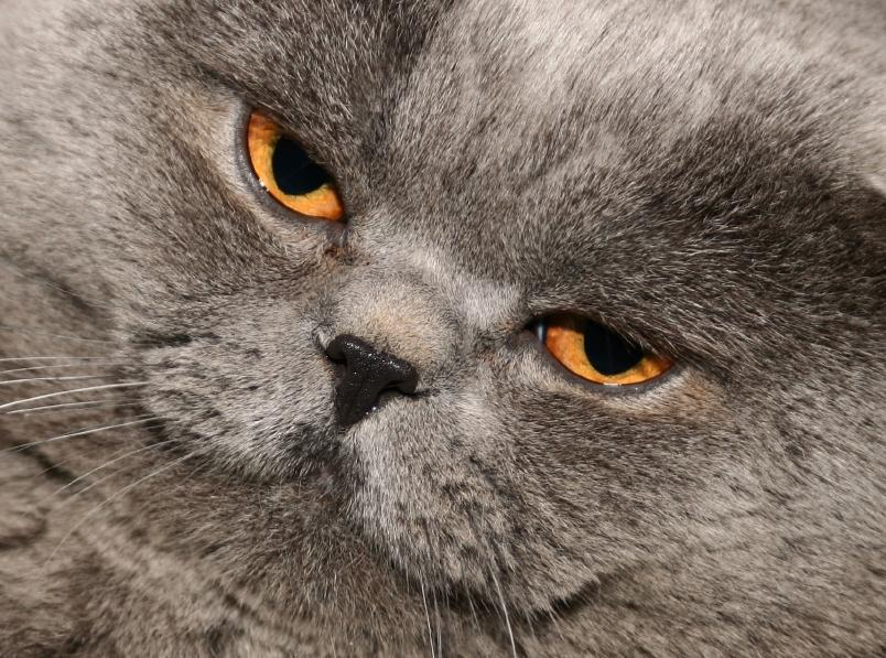 health facts about fat cats lovetoknow