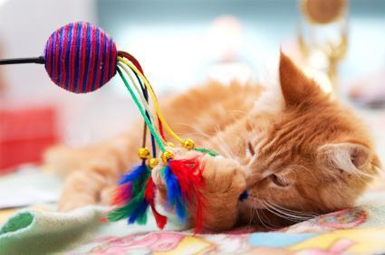 https://cf.ltkcdn.net/cats/images/slide/89828-425x282-cat_wand.jpg