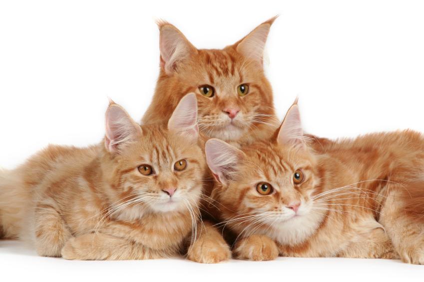 https://cf.ltkcdn.net/cats/images/slide/89879-849x565-MCP3.jpg