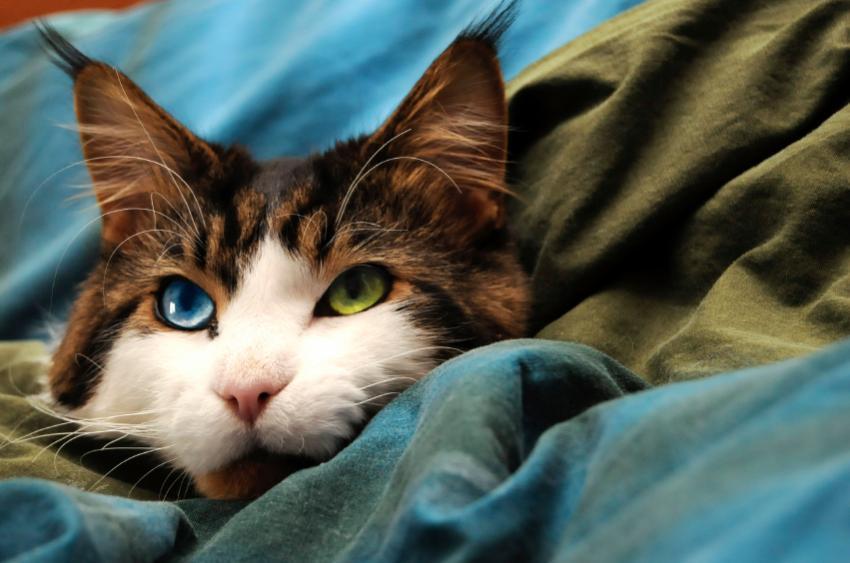 https://cf.ltkcdn.net/cats/images/slide/89880-850x563-MCP4.jpg