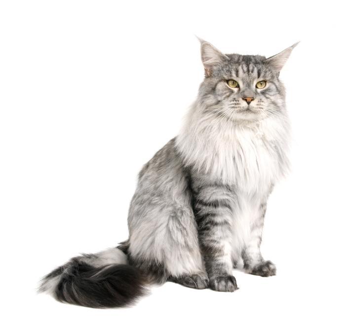 https://cf.ltkcdn.net/cats/images/slide/89884-705x681-MCP8.jpg