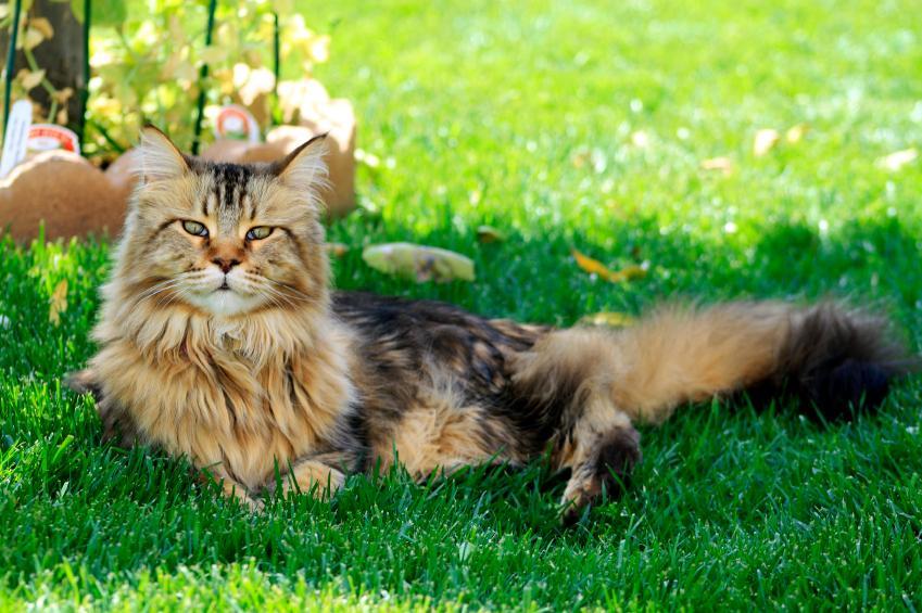 https://cf.ltkcdn.net/cats/images/slide/89885-849x565-MCP9.jpg