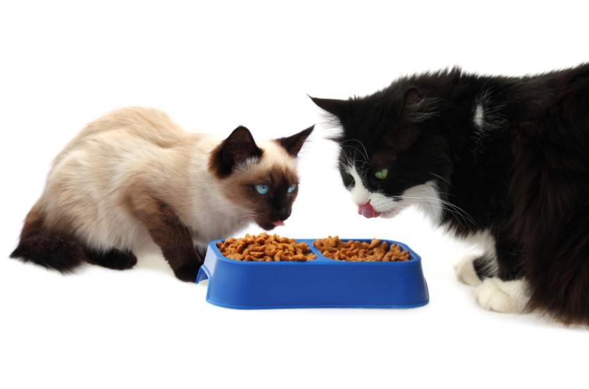 https://cf.ltkcdn.net/cats/images/slide/89890-850x561-diabetes-symptoms-hunger.jpg