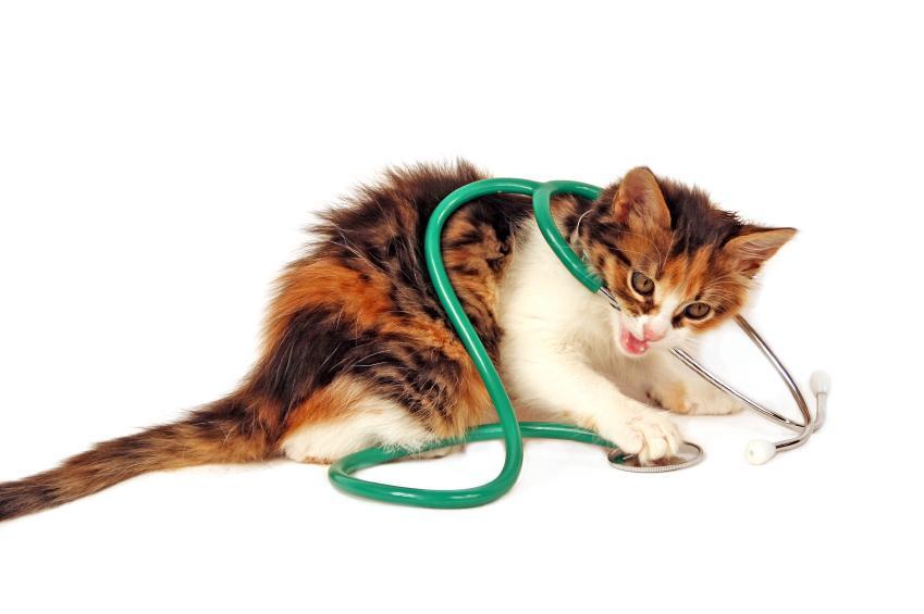 https://cf.ltkcdn.net/cats/images/slide/89893-849x565-diabetes-symptoms-breathing.jpg