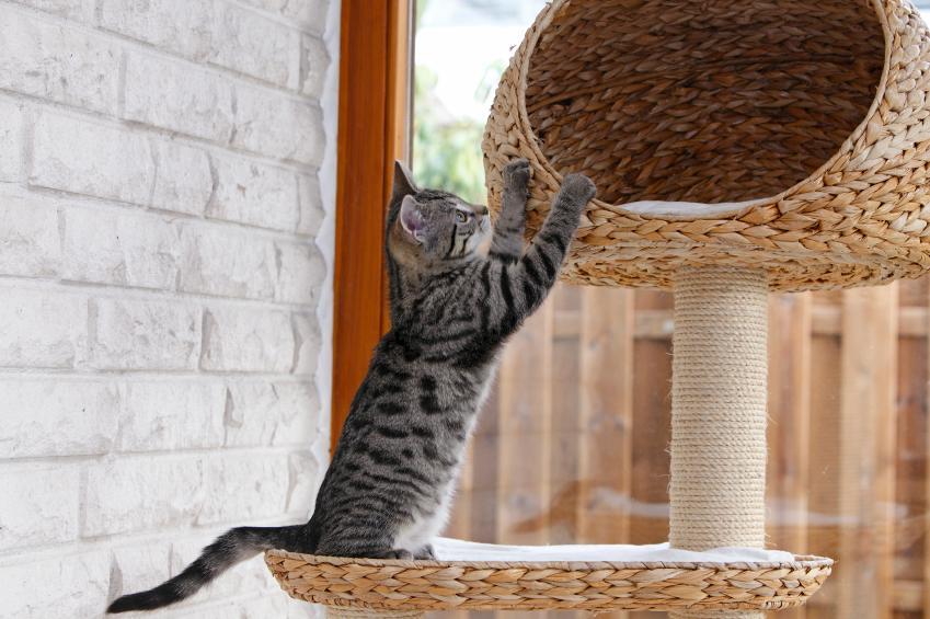 https://cf.ltkcdn.net/cats/images/slide/89904-849x565-cat-scratcher1.jpg