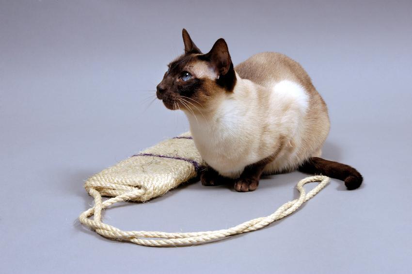 https://cf.ltkcdn.net/cats/images/slide/89908-850x565-cat-scratcher5.jpg