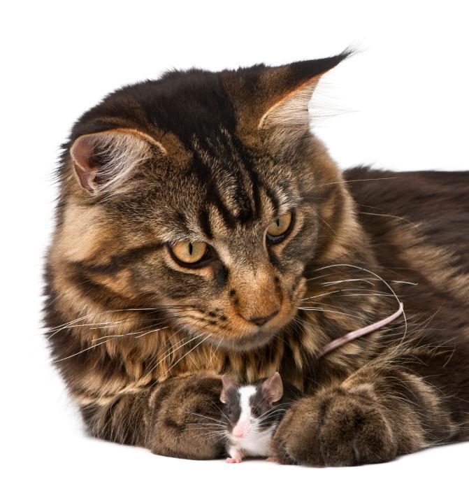 https://cf.ltkcdn.net/cats/images/slide/89911-671x715-maine-coon-2.jpg