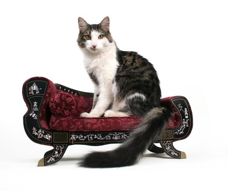 https://cf.ltkcdn.net/cats/images/slide/89946-757x634-happy-cat.jpg