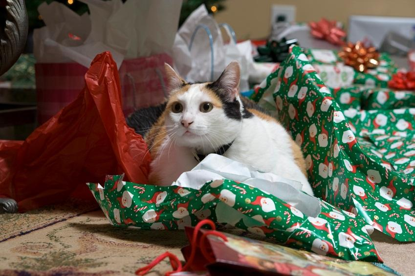 calico cat laying in fabric - Christmas Names For Cats