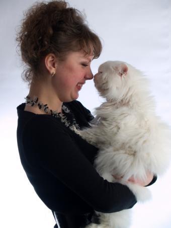 https://cf.ltkcdn.net/cats/images/slide/125504-600x800r1-Cuddling-a-Persian.jpg