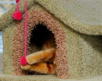 Make or Buy a Cat Condo