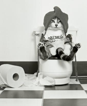 https://cf.ltkcdn.net/cats/images/slide/128962-628x764r2-Kitty-on-the-throne.jpg