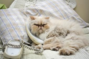 https://cf.ltkcdn.net/cats/images/slide/128964-849x565r2-Kitty-on-the-phone.jpg