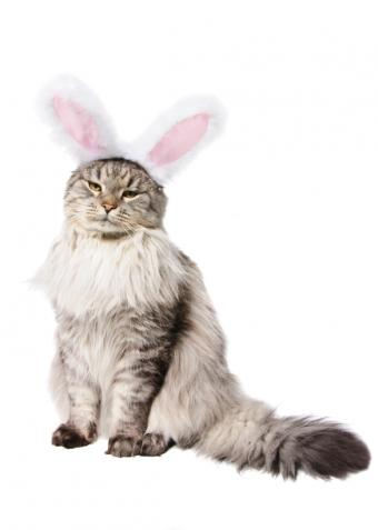 https://cf.ltkcdn.net/cats/images/slide/128966-585x821r2-Kitty-in-a-rabbit-suit.jpg