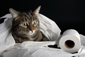 https://cf.ltkcdn.net/cats/images/slide/128972-849x565r2-Kitty-playing-in-TP.jpg
