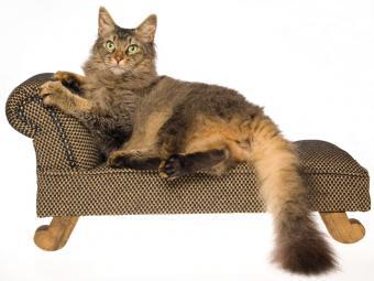 https://cf.ltkcdn.net/cats/images/slide/130988-800x600r1-LaPerm.jpg