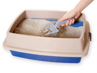 Essential Tips for Disposing of Kitty Litter