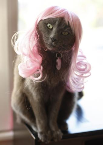 Cat in a pink wig