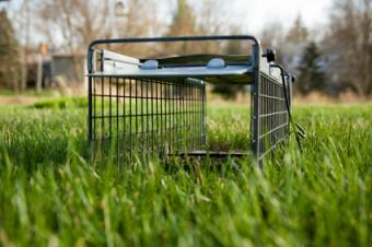 Humane Traps for Feral Cats