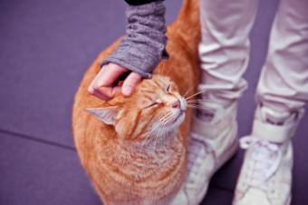 Contented cat being petted