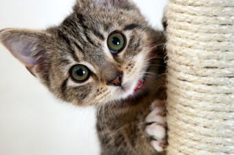 kitten peering behind post