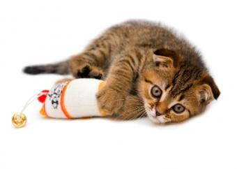 plaful kitty