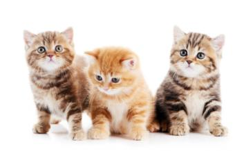 Everything You Need to Know About Taking Care of Kittens