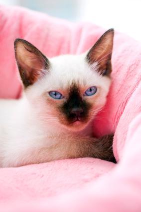 Kitten snuggling in her bed