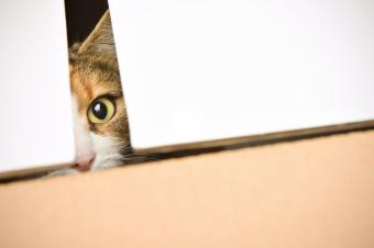 Hiding Spots for Cats