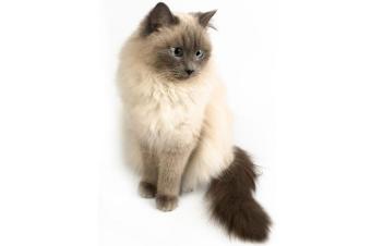 https://cf.ltkcdn.net/cats/images/slide/165800-850x565-89696-850x565-Full-view-Himi.jpg